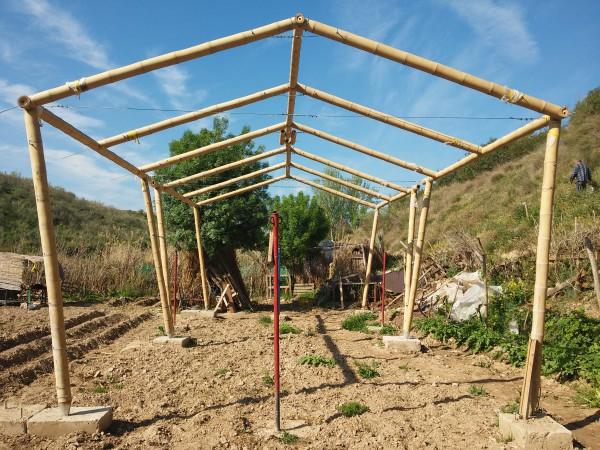 El cultivo de bamb como mejora de la calidad ambiental y for Materiales para un vivero